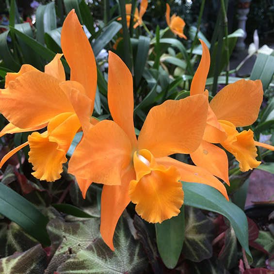 Photo of an orange flowering plant at Edmonton West Massage Therapy Clinic